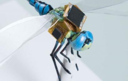 Forskere har lavet guldsmede om til fjernstyrede overvågningsdroner