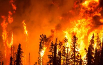 """""""Akut national sikkerhedstrussel"""": USA´s nye administration sætter klimaet først"""