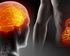 Den anden hjerne? Ny forskning revolutionerer.