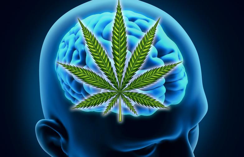 Ny Harvard forskning: Cannabis øger hjernefunktioner