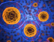 Ny forskning: Medicin der kan stoppe aldring på vej