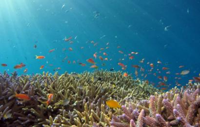 Et af verdens sundeste koralrev har fået tredoblet sit fredede areal af USA