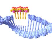 Ny CRISPR teknologi dræber præcist kræftceller: Et vigtigt skridt på vej til en kur mod kræft