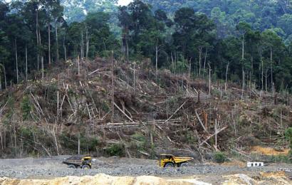 Ny teknologi kan dyrke formede træmøbler i et laboratorium og dermed reducere CO2 og træspild