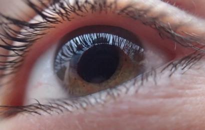 Ny medicin får blinde mus til at se igen – og det kan betyde en del for vores aldring