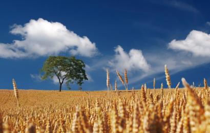 Pesticider er ikke nødvendige i landbruget dokumenterer FN og ny rapport