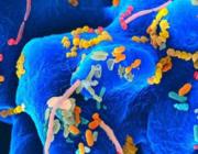 Dine mavebakterier påvirker din visdom og graden af ensomhed ifølge ny forskning