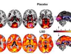 Kan microdosing gøre dig klogere og lykkeligere: Neurovidenskaben dokumenterer ny trend