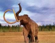 Mammutter kan igen dominere de sibiriske stepper: Russiske forskere har en plan