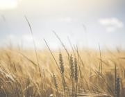 Britisk studie: CO2 venligt landbrug er muligt uden tab af indtægt eller færre fødevarer