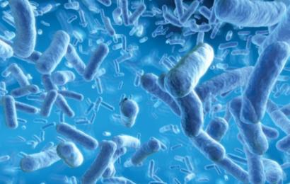 Dine mavebakterier er afgørende for din fysik, humør og personlighed