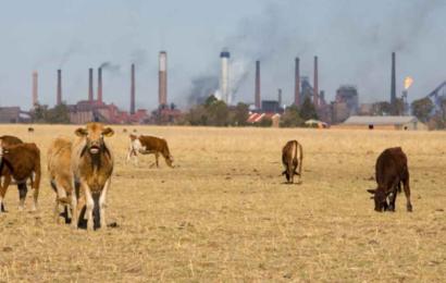 Metan står for 25 % af den globale opvarmning og skal reduceres drastisk ifølge FNs klimapanel