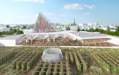 På tagene i Paris er fremtidens landbrug i gang – og der produceres allerede økologisk mad i tonsvis