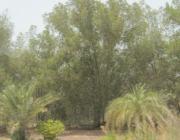 50 milliarder træer: Saudi-Arabien annoncerer verdens største træplantningsprojekt