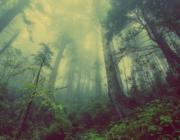 Træer har en bevidsthed dokumenterer forskning og giver et nyt perspektiv på klimakrisen