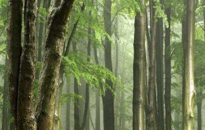 Skovbadning er det nye universalmiddel læger anbefaler til krop og sind