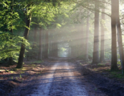 Skovbadning: Den nye trend læger anbefaler til helbredelse af krop og sind