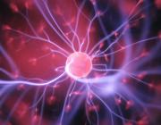 Kærlighedshomonet oxytocin kan sandsynligvis kurere demens og alzheimers viser ny forskning