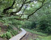 Danmarks nye natur nationalparker kommer sandsynligvis til at ligge her