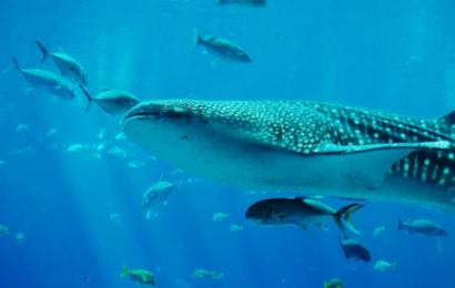 Australien freder kæmpe havområde dobbelt så stort som Great Barrier Reef