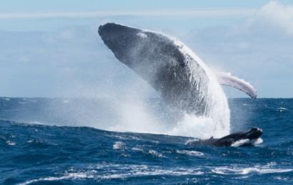 50 lande sætter mål om at beskytte 30 procent af verdens hav- og landareal inden udgangen af årtiet
